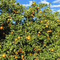 Backpacker Jobs - Farmarbeit & Fruitpicking