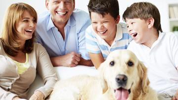 Hundeversicherungen – Welche Versicherungen brauche ich für meinen Vierbeiner?
