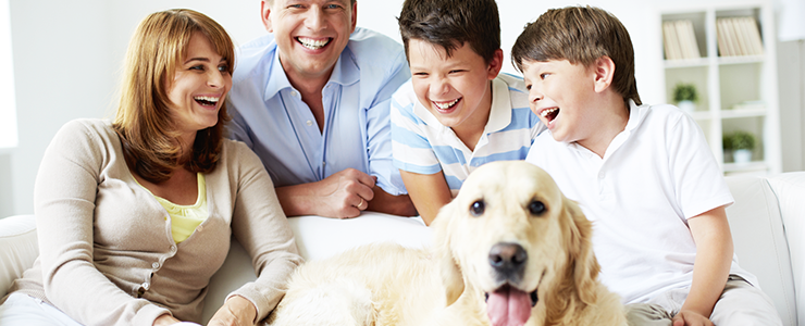 Hundeversicherung – Welche Versicherungen brauche ich für meinen Vierbeiner?