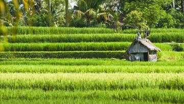 Reiseführer Bali: Ein Ausflug nach Ubud in das kulturelle Zentrum Balis