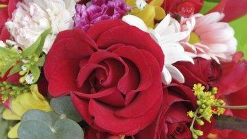 Das 1×1 der Blumensprache