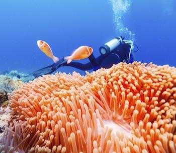 seychellen-tauchen