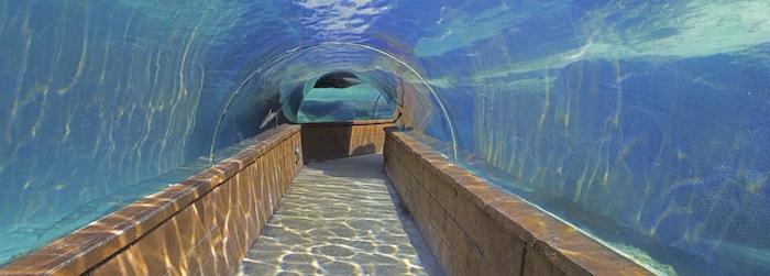 Bild: ©joesphotos / iStock - Reisetipp: das Atlantis Aquarium auf Bahamas