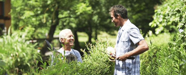Heckenmyrte Maigrün – Tipps zur Pflege