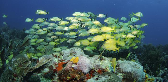 Bildquelle: ©Hoatzinexp / iStock - Korallenriff Kuba