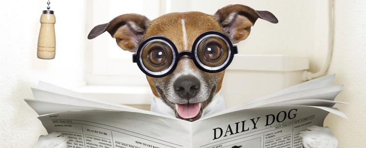 Hundetoilette: Sinn oder Unsinn? (Test & Vergleich von Hundetoiletten)