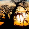 suedafrika giraffe