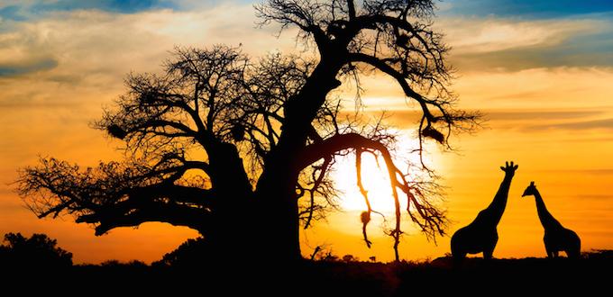 Urlaub in Südafrika: Tipps und Kreditkarten für Kapstadt und Johannesburg