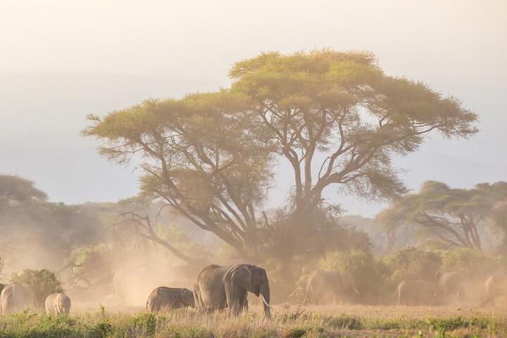 Baum und Elefant Tansania | © panthermedia.net / matej kastelic