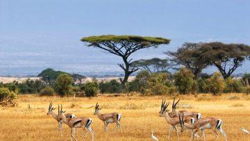 Diesseits von Afrika – Unsere schönsten Reiseziele für eine Rundreise durch Afrika