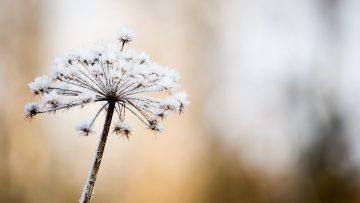 Bevor der Winter in unseren Garten kommt – Wie wir Rose, Rasen und Co. vor der Kälte schützen können
