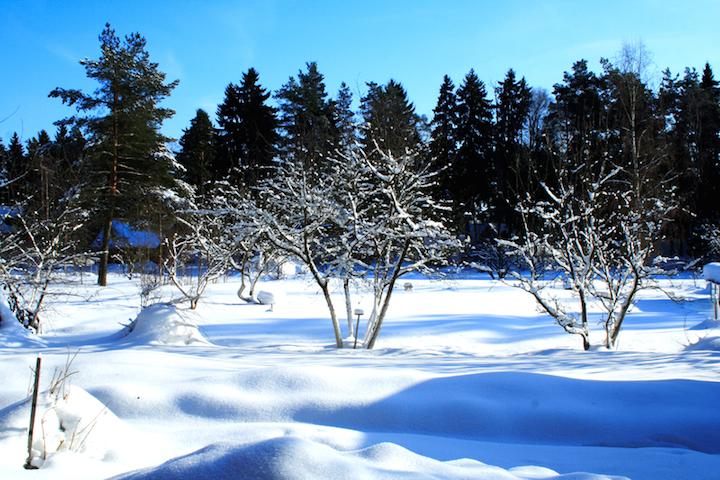 Winterlicher Garten | © panthermedia.net /redwine2001