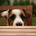 Gadgets für Hunde und ihre Herrchen | © panthermedia.net /Marion Flemming