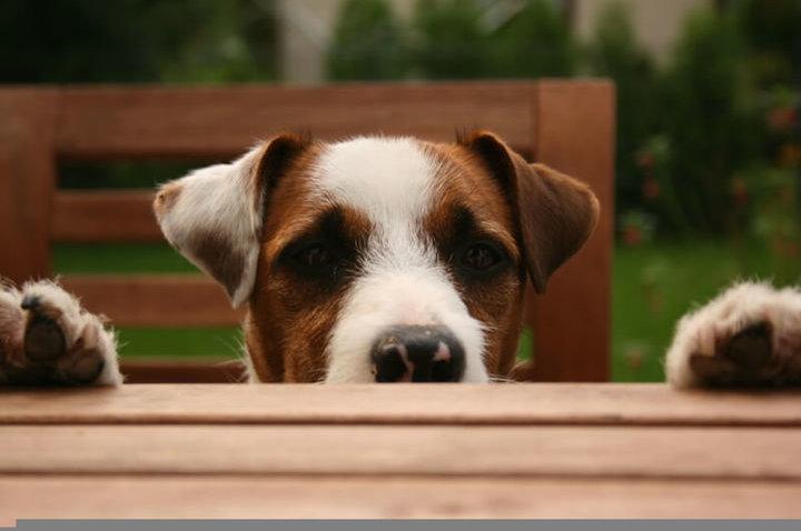 Einfach wau! – Fünf ausgefallene Geschenkideen für Hundefreunde und ihre Vierbeiner