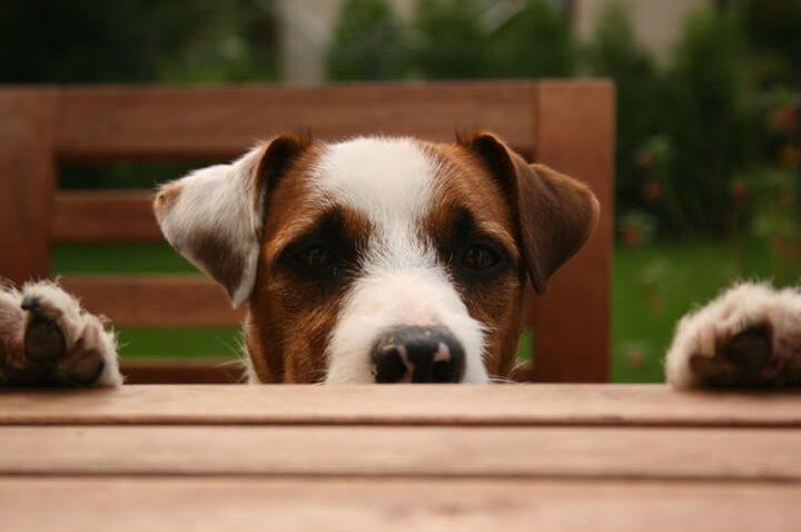 Gesunde Ernährung für Hunde: Das richtige Hundefutter ist wichtig für die Gesundheit