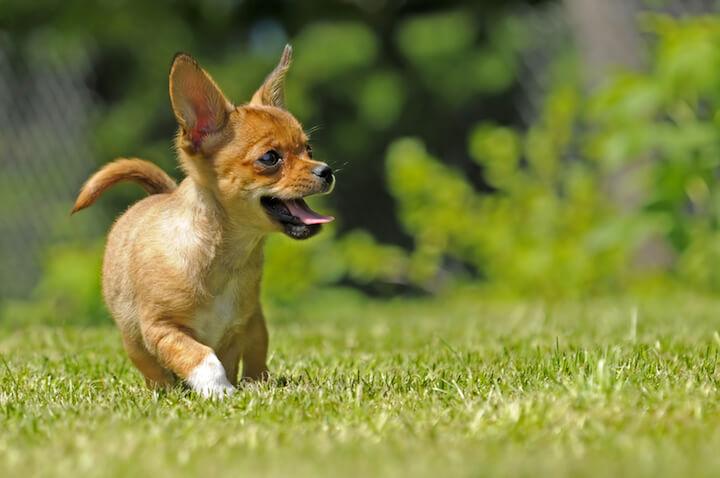 Fit mit dem richtigen Hundefutter | © panthermedia.net / Peter Pfändler