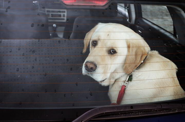 Hunde sterben in heißen Autos |© panthermedia.net / amiga2005