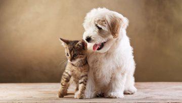Öle für Haustiere – Welches Öl eignet sich für Hunde und Katzen am besten?