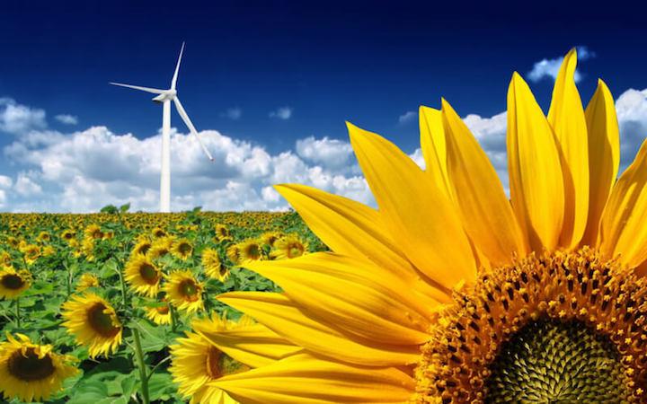 Ökostrom im Check – Grüne Power aus der Steckdose?