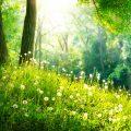 Wald und Blumen im Frühling | © panthermedia.net /Subbotina