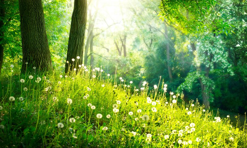 Fantastische Reiseziele im Frühling – Wo ihr im Frühjahr unbedingt hin müsst