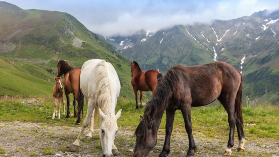 Die wunderbare Welt der Pferde