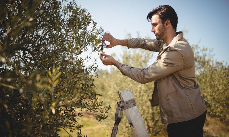 Bäume beschneiden – Tipps und Tricks für Hobbygärtner