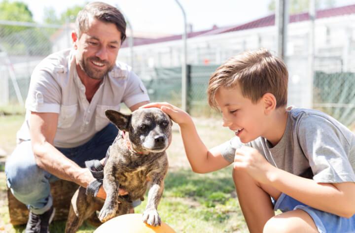 Familienhund aussuchen | © panthermedia.net / Arne Trautmann