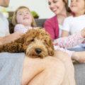 Hund in der Familie | © panthermedia.net / Graham Oliver