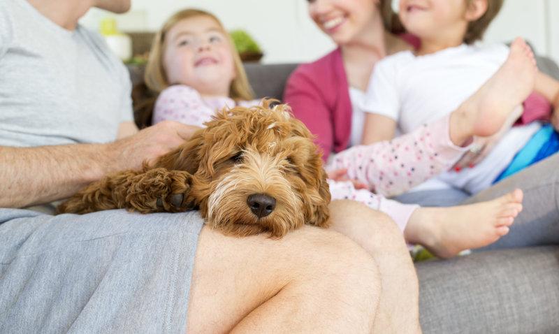 Welche Hunderasse ist die richtige für uns?