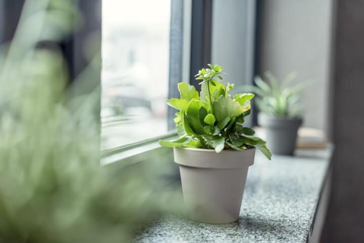 Pflanze auf der Fensterbank | © panthermedia.net / IgorVetushko