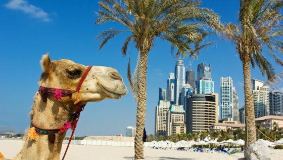 Traumhaftes Dubai – All Realestates macht's möglich!