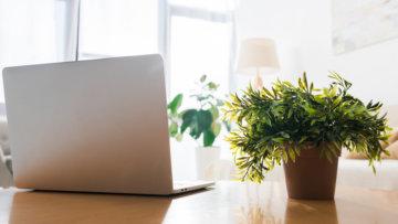Kein grüner Daumen erforderlich! – Die Vorteile von Pflanzen in der Wohnung