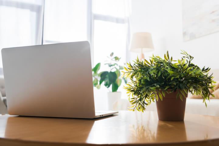 kein gr ner daumen erforderlich die vorteile von pflanzen in der wohnung thebetterdays. Black Bedroom Furniture Sets. Home Design Ideas