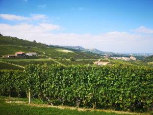 Die besten Weinregionen in Italien