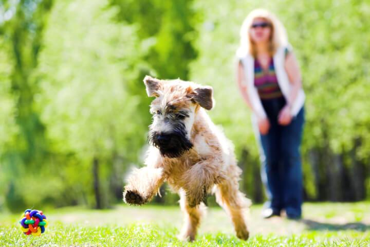 Hund spielt im Garten | © panthermedia.net /babenkodenis
