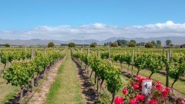 Reisen mit Genuss: Das sind die schönsten Weinregionen